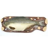 Пано_риба