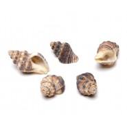 Морски охлювчета за декорация